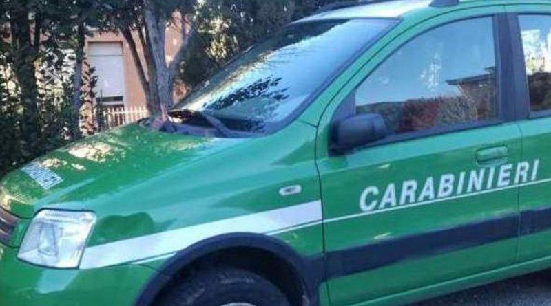 (FOTO) Bruciava rifiuti in forno: blitz Carabinieri Forestali nel Napoletano