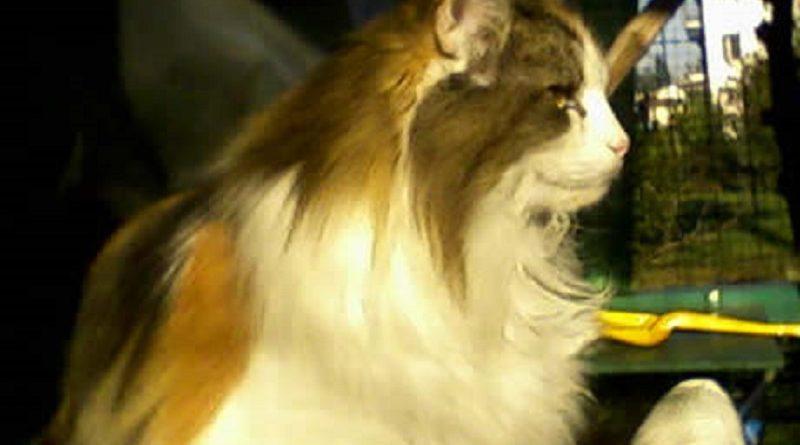 Nocera Inferiore Scoperto Allevamento Abusivo Di Gatti Delle