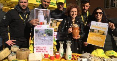 Pecorino day: Coldiretti a Napoli per salvare antico mestiere