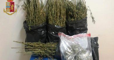 """(VIDEO) Pianura. Polizia scopre """"serra indoor"""" per la coltivazione di droga"""