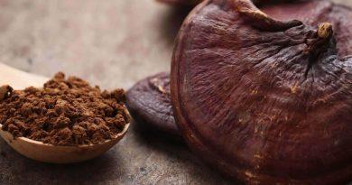 I funghi medicinali sempre più usati per il benessere